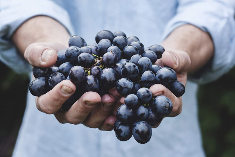 -absolutely_free_photos-original_photos-grapes-fruit-holding-2508x1672_87774 (1)