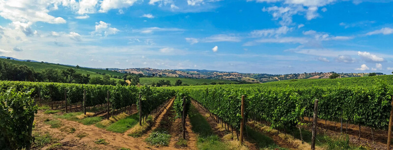 -absolutely_free_photos-original_photos-vineyard-in-italy-4656x1776_62810 (1)