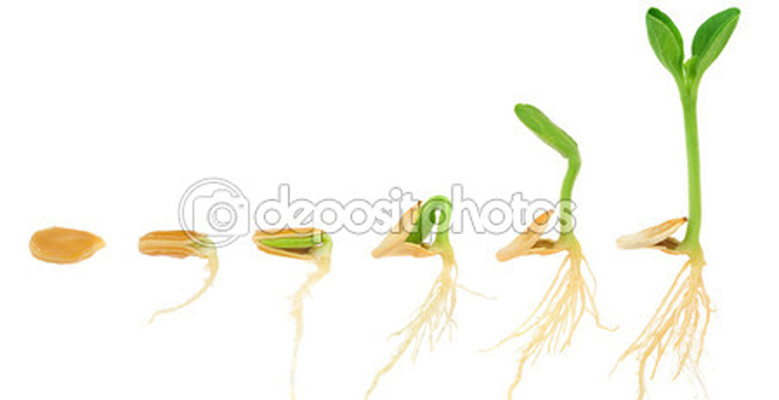 depositphotos_10123804-Sequence-of-pumpkin-plant-growing