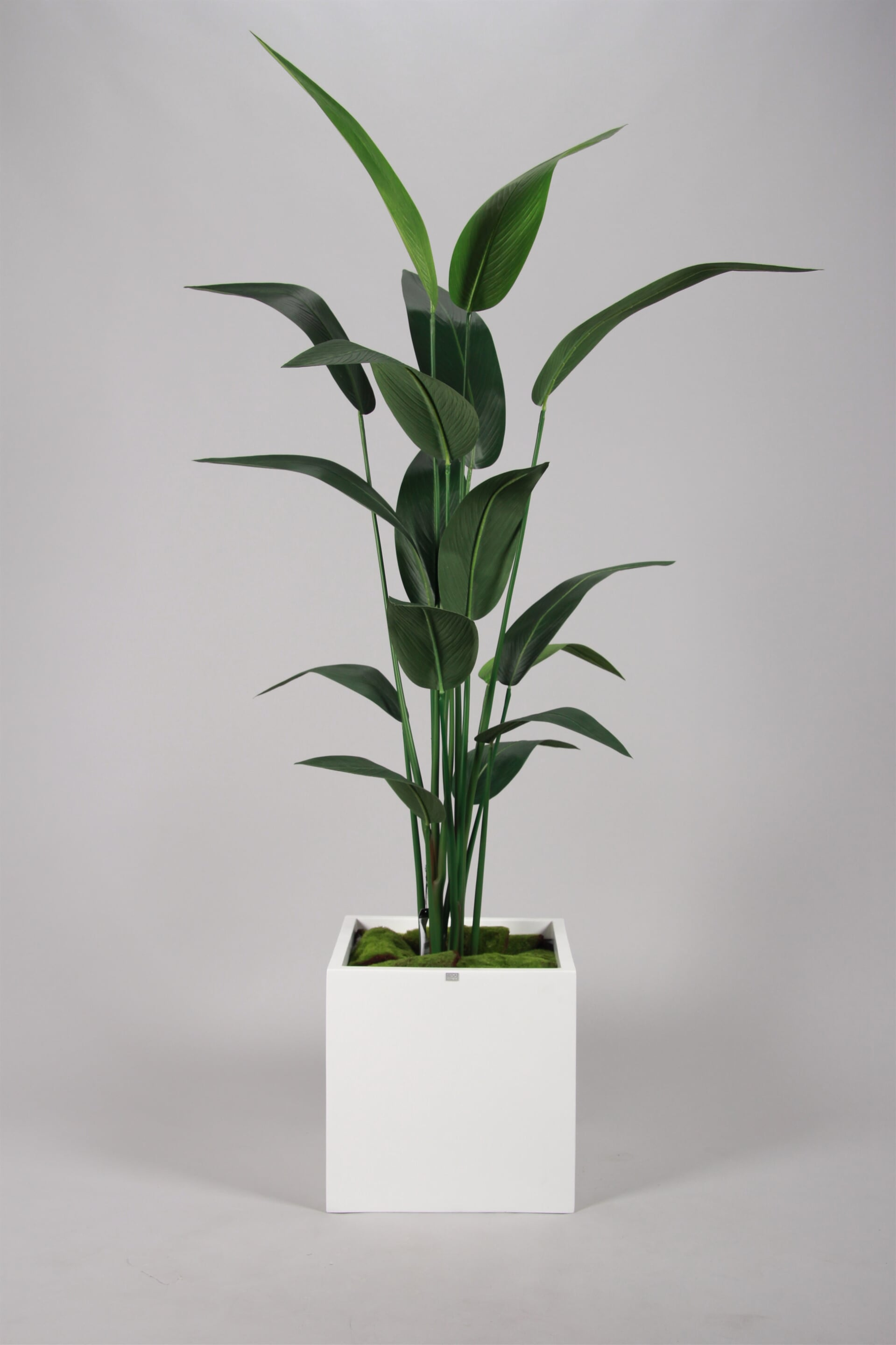 Bird Leaf of Paradise 180cm