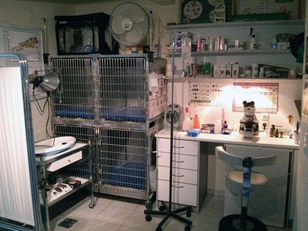Βραχεία νοσηλεία - μικροσκόπιση - Κτηνιατρείο Σώρος Χρήστος
