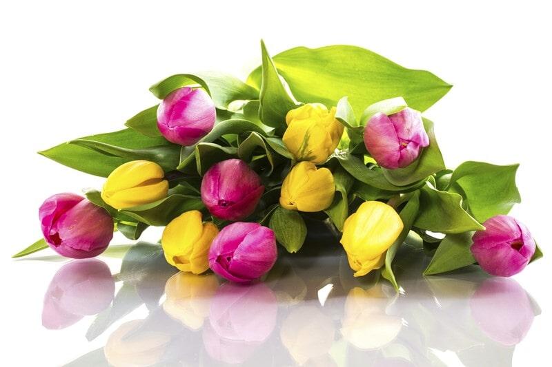 Květinářství Klívie Uherské Hradiště